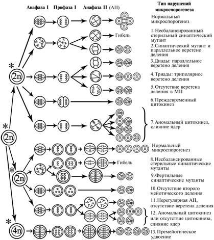 Схема микроспорогенеза